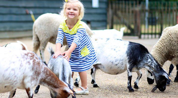 Let's Go: geitenboerderij Amsterdamse Bos